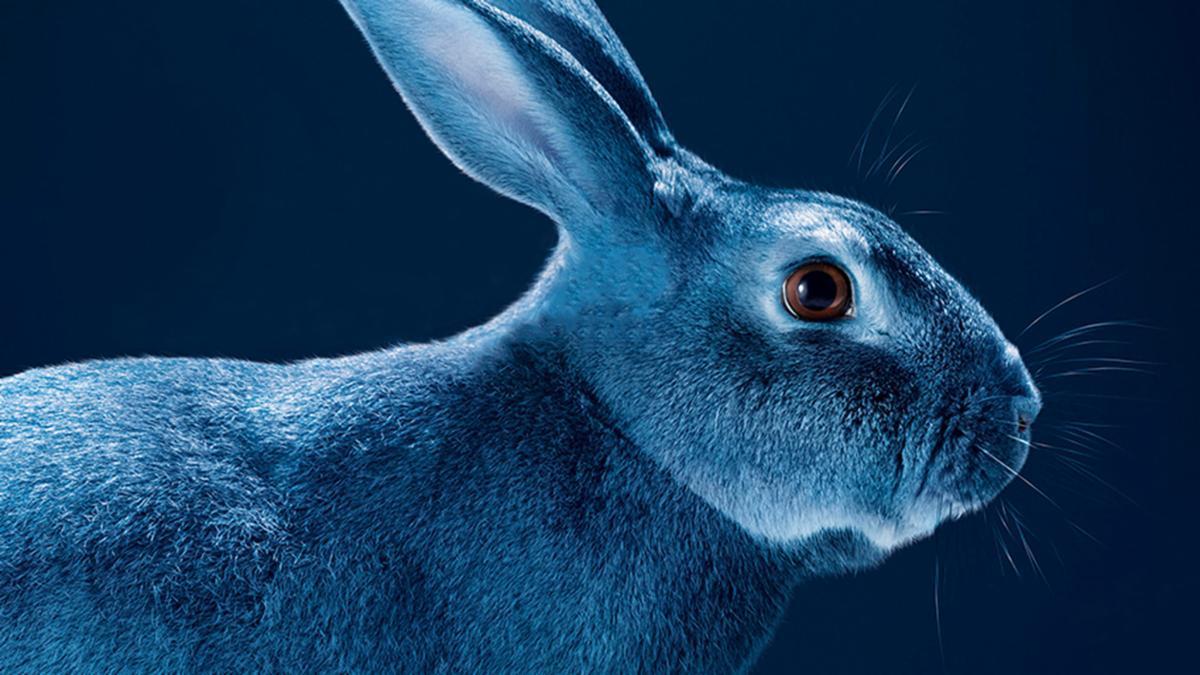 Картинка зайца синий